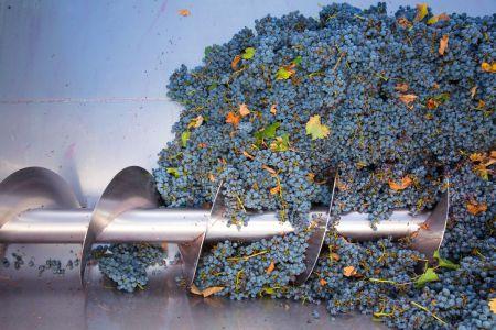 Sorting grapes